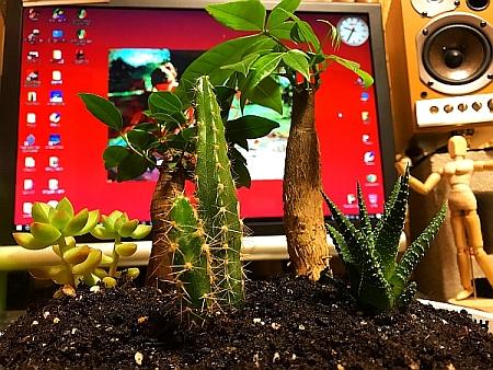 ジオラマ盆栽